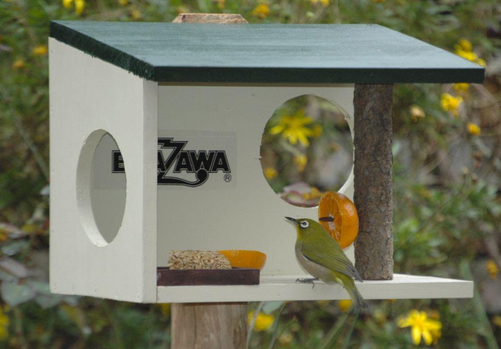 庭と野鳥とROCK'N'ROLL!