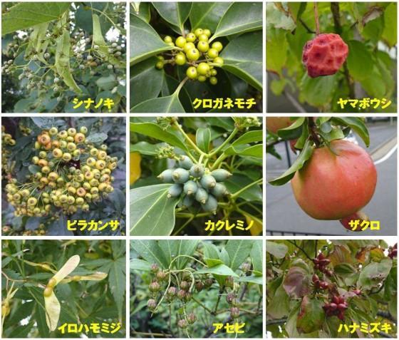 名古屋の樹木の秋