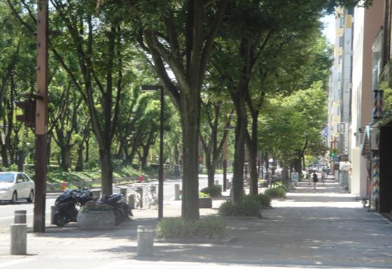 久屋大通り街路樹(FB用)